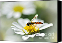 White Daisy Canvas Prints - Bee with Rainbow Wings Canvas Print by Kaye Menner