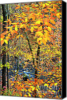 Mountain Stream Canvas Prints - Beech Leaves Birch River Canvas Print by Thomas R Fletcher