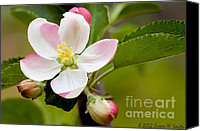 Susan M. Smith Canvas Prints - Being Fruitful Canvas Print by Susan Smith