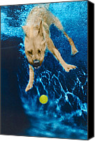 Diving Dog Canvas Prints - Belly Flop Canvas Print by Jill Reger