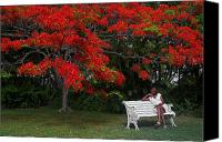 Williams Canvas Prints - Bench and Red Flamboyant- St Lucia Canvas Print by Chester Williams