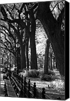 Park Benches Digital Art Canvas Prints - BENCHES TREES and LAMPS in BLACK AND WHITE Canvas Print by Rob Hans