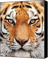 Realistic Art Canvas Prints - Bengal Tiger Canvas Print by Bill Fleming
