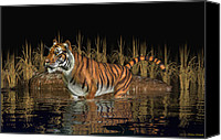 Bigcat Canvas Prints - Bengal Tiger Canvas Print by Walter Colvin