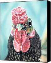 Photorealism Canvas Prints - Benny the Bantam Canvas Print by Baron Dixon
