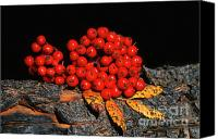 Red Berries Canvas Prints - Berries and Bark Canvas Print by Sandra Bronstein