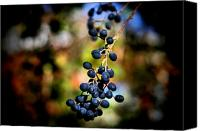 Digital Posters Photo Canvas Prints - Berry Cold Out Canvas Print by Karen M Scovill