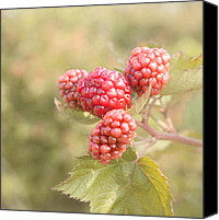 Red Berries Canvas Prints - Berry Good Canvas Print by Kim Hojnacki