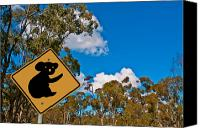 Koala Canvas Prints - Beware of Koalas  Canvas Print by Paul Donohoe