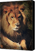 Lion Digital Art Canvas Prints - Big Boy Canvas Print by Laurie Search