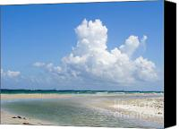 Buffet Canvas Prints - Big Florida cotton  Canvas Print by Jack Norton