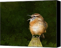 Carolina Wren Canvas Prints - Big Mouth  Canvas Print by Steven Richardson