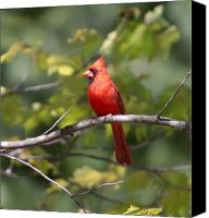 Nature Artwork Canvas Prints - BIG red Canvas Print by Robert Pearson