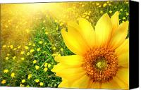 Circle Digital Art Canvas Prints - Big yellow sunflower  Canvas Print by Sandra Cunningham