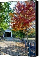 Indiana Autumn Canvas Prints - Billie Creek  Canvas Print by Brittany H
