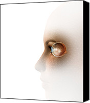Biometric Canvas Prints - Biometric Recognition, Conceptual Artwork Canvas Print by Claus Lunau