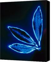 Blue Leaf Canvas Prints - Bionergy Canvas Print by Gerard Fritz