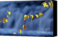 Blue Leaf Canvas Prints - Birch Leaves and Waterfall - D006066 Canvas Print by Daniel Dempster