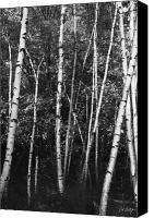 Autumn Photographs Canvas Prints - Birch Trees Canvas Print by Phill  Doherty