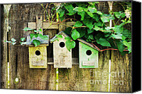 "\""painterly Photography\\\"" Photo Canvas Prints - Bird Condos Canvas Print by Darren Fisher"