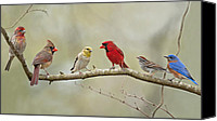 Finch Canvas Prints - Bird Congregation Canvas Print by Bonnie Barry