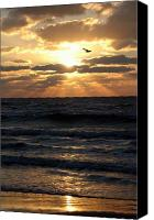Ocean Photography Canvas Prints - Bird in sunset Canvas Print by Evelyn Patrick