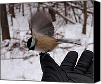 Glove Canvas Prints - Bird in the Hand Canvas Print by Joshua House