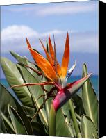Bird Canvas Prints - Bird of Paradise Canvas Print by Dustin K Ryan