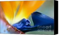 Inspirational Photograph Canvas Prints - Bird-of-Paradise Canvas Print by Heiko Koehrer-Wagner