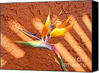 Orange Canvas Prints - Bird of Paradise Canvas Print by Judee Stalmack
