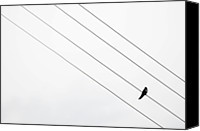 Solitude Canvas Prints - Bird On A Wire Canvas Print by Copyrights by Sigfrid Lpez