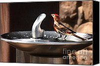 Finches Canvas Prints - Bird Spa Canvas Print by Christine Till