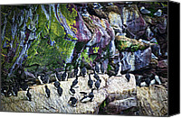 Saint Mary Canvas Prints - Birds at Cape St. Marys Bird Sanctuary in Newfoundland Canvas Print by Elena Elisseeva