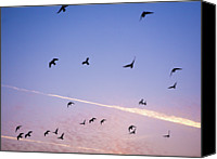 Flock Of Birds Canvas Prints - Birds Flying At Sunset Canvas Print by Sarah Palmer