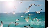 Botanicals Mixed Media Canvas Prints - Birds in Flight  Canvas Print by AdSpice Studios