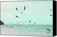 Flock Of Birds Canvas Prints - Birds In Flight Canvas Print by Kim Fearheiley Photography