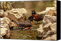 Card Sculpture Canvas Prints - Birds of a Feather Swim Together Canvas Print by Inspired Nature Photography By Shelley Myke
