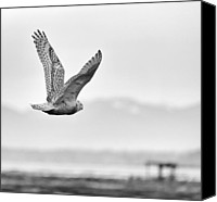 Sat Canvas Prints - Birds of BC - No.16 - Snowy Owl - Bubo scandiacus Canvas Print by Paul W Sharpe Aka Wizard of Wonders