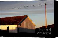 Cow Canvas Prints - Birds on a Wire Canvas Print by Wingsdomain Art and Photography