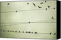Flock Of Birds Canvas Prints - Birds On Telephone Wire Canvas Print by Lucy Loomis, Photographer