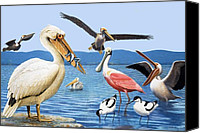 White Pelican Canvas Prints - Birds with strange beaks Canvas Print by R B Davis