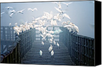 Flock Of Birds Canvas Prints - Birds Canvas Print by Zu Sanchez Photography