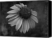 Bittersweet Canvas Prints - Bittersweet Memories - BW Canvas Print by David Dehner