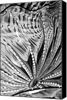 Black Glass Art Canvas Prints - Black - White Canvas Print by Jan Canavan