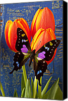 Tulip Canvas Prints - Black and Pink Butterfly Canvas Print by Garry Gay