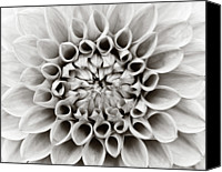 Natural Pattern Photo Canvas Prints - Black And White Dalhia Canvas Print by Photo by Dean Forbes