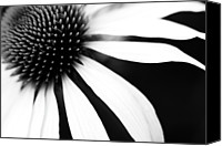 Flower Photo Canvas Prints - Black And White Flower Maco Canvas Print by Copyright Johan Klovsjö