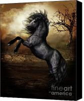 Black Horse Canvas Prints - Black Beauty Canvas Print by Shanina Conway