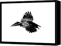Bird Art Canvas Prints - Black Bird Number 1 Canvas Print by Scott Brown