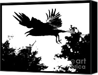 Bird Art Canvas Prints - Black Bird Number 2 Canvas Print by Scott Brown